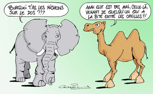 HUMOUR - blagues - Page 6 Elepha10