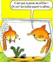 HUMOUR - blagues - Page 6 Images17