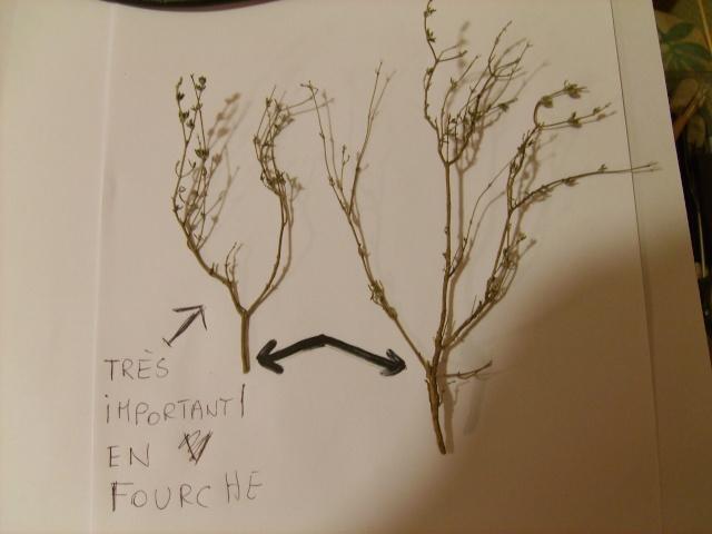 confection d'un arbre !! S5000117