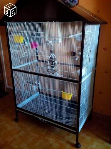 A vendre 6 Ondulées + Cage + Accessoires. B3144410