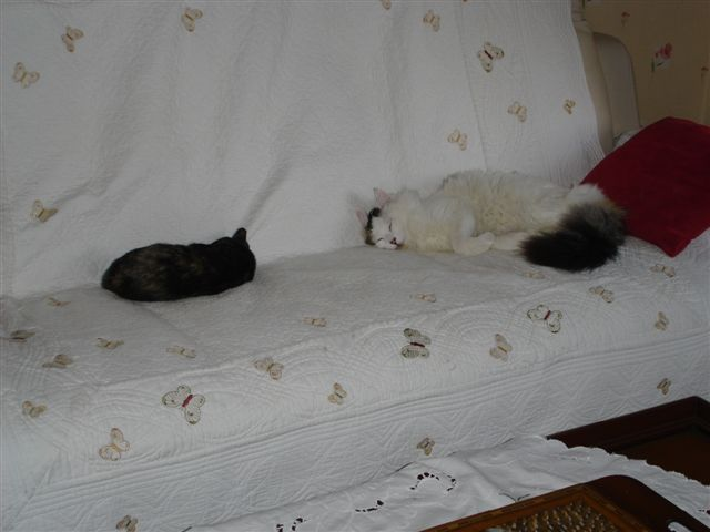 LULU, chatonne écaille de tortue, née vers le 15/09/15 Dsc01118