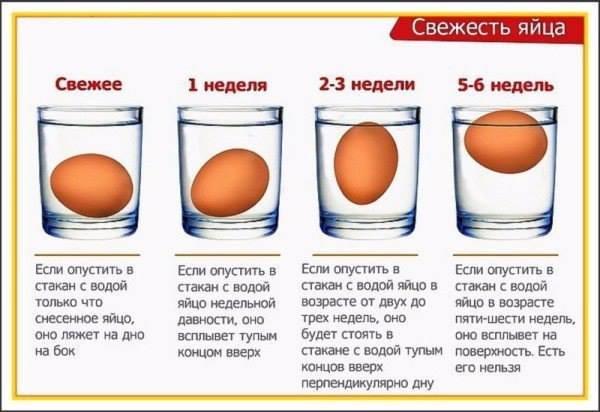 Определение  свежести яиц. 10414310