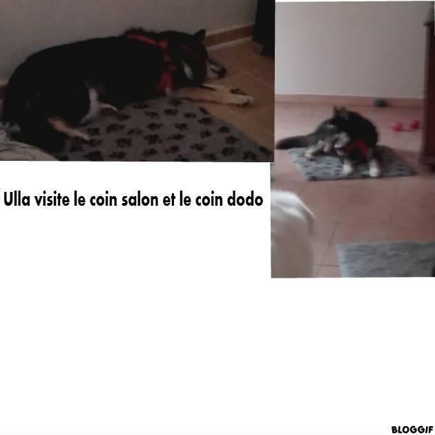 ULLA X Husky née en janvier 2001( f ) adoption uniquement REFU83  - Page 2 6fe53b10