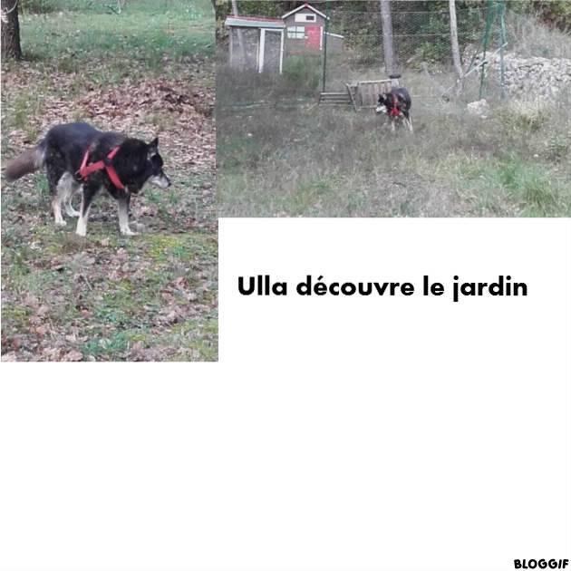ULLA X Husky née en janvier 2001( f ) adoption uniquement REFU83  - Page 2 Cbcf0510