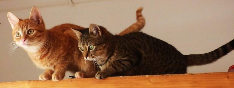 EROS et AMOR (ADOPTE) -  Mâles, août 2015, chez Florin - Amor adopté par Veronica (Belgique) - Eros adopté par Céline (dpt83) Amor1610