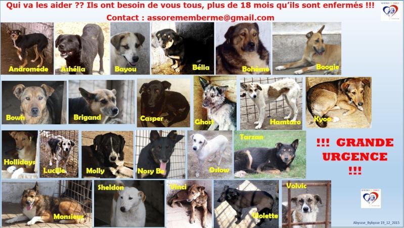 H E L P !  + de 4 ans de captivité , et jusqu'à 5 ans pour BERLIOZ et DUNKIN, pour ces chiens sauvés de la fourrière-mouroir en décembre 2015 ! Grande10