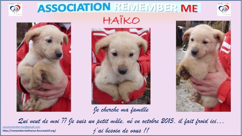 HAÏKO, chiot mâle, né en octobre 2015 (Pascani)-en pension chez Lucian Haiko10