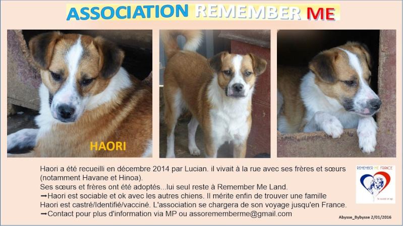HAORI - x 3 ans - Asso Remember Me - en fa (Belgique) Haori110