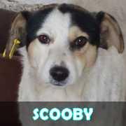 Grande campagne d'identification et vaccination à Pascani : ils ont besoin de vous ! - Page 3 Scooby10