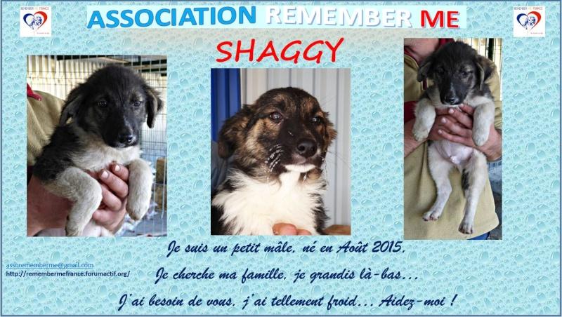 SHAGGY, chiot mâle, né en août 2015 (Pascani) - adopté par Sabine (Belgique) Shaggy11