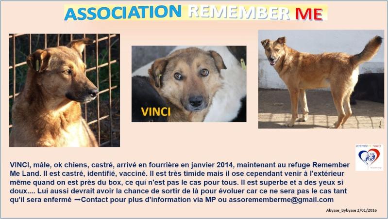 VINCI - Mâle croisé, taille moyenne né env 2012 (PASCANI) - décédé - Page 2 Vinci10