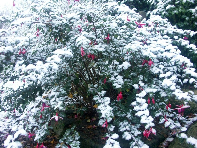 Ambiance et couleurs hivernales, décos naturelles Hiver_10
