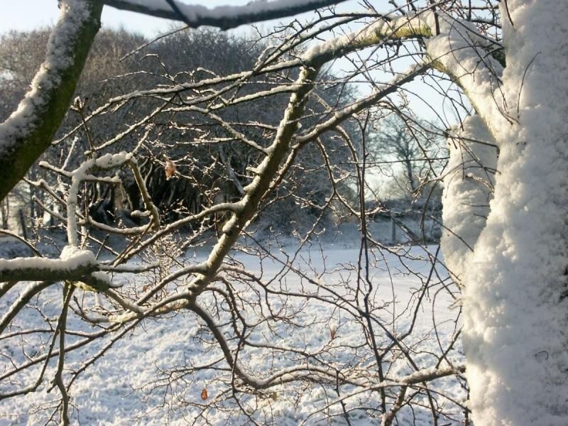 Ambiance et couleurs hivernales, décos naturelles Hiver_11
