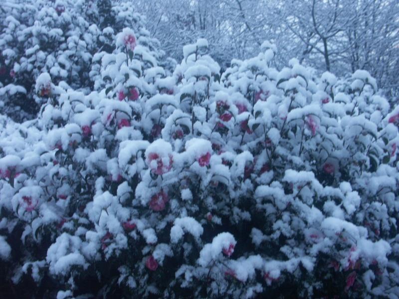 Ambiance et couleurs hivernales, décos naturelles Leurca10