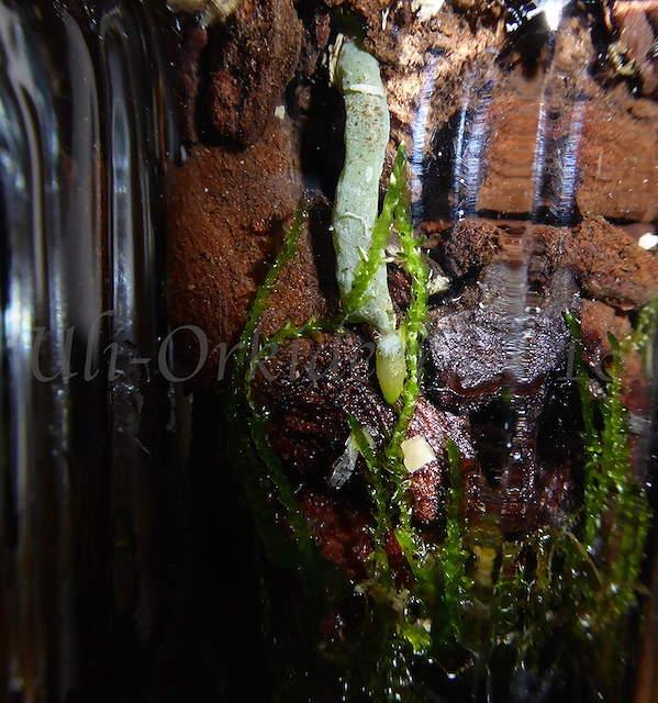 Orchideen in Glasvasen 4 (SGK) - Seite 14 P1020110