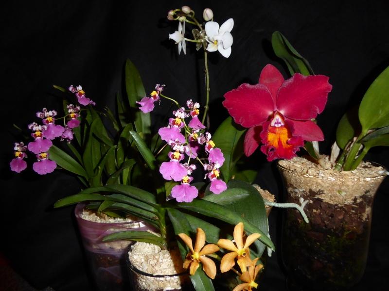 Orchideen in Glasvasen 4 (SGK) - Seite 5 P1030510