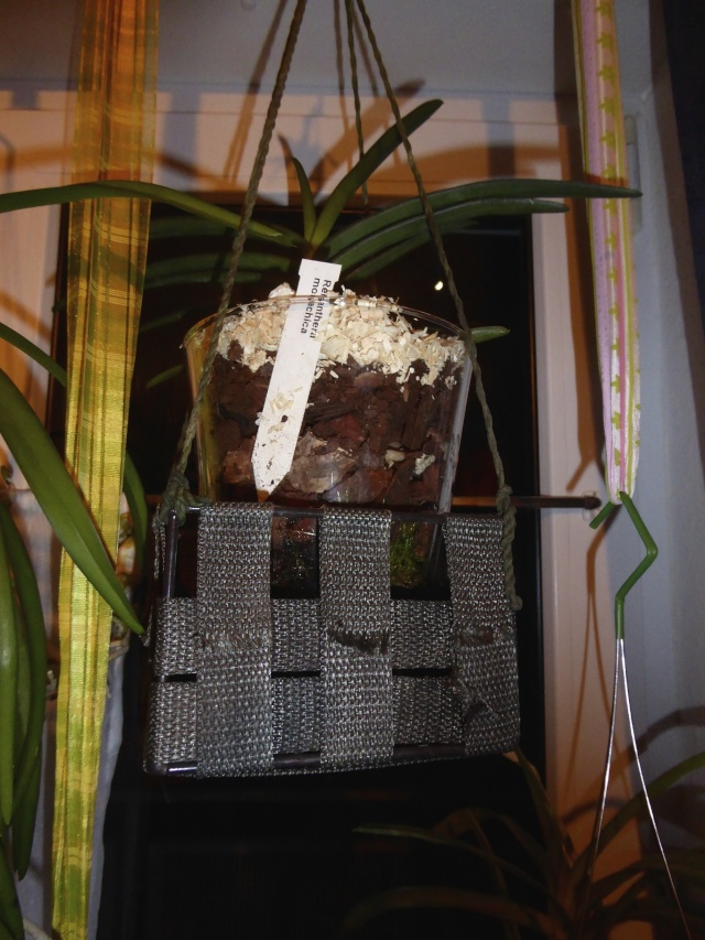 Orchideen in Glasvasen 4 (SGK) - Seite 5 P1030515