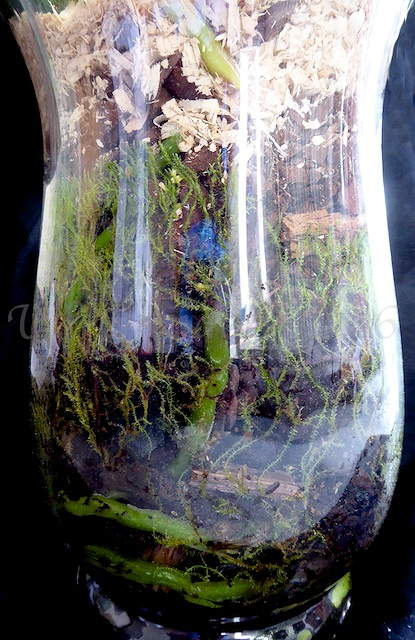 Orchideen in Glasvasen 4 (SGK) - Seite 14 P1030810