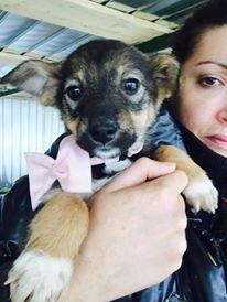 CALVA, chiot femelle, née en août 2015 (Pascani) - REMEMBER ME LAND - adoptée par Michele (dpt67) 12285510