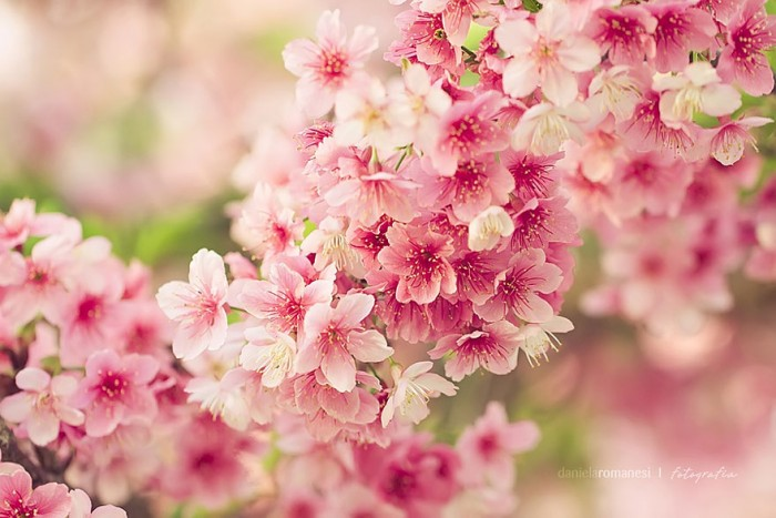 Fleurs  11111111