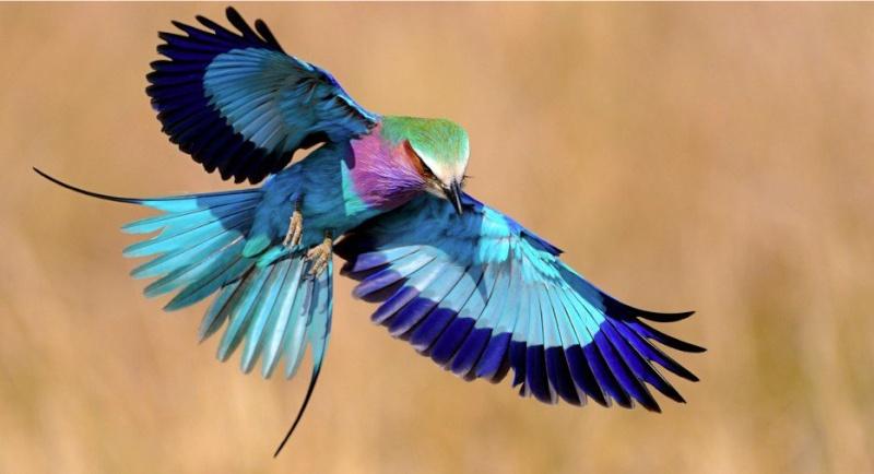 Oiseaux - Page 6 56123810