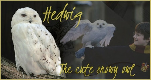 !! WAS BEREITS GESCHAH !! Hedwig10