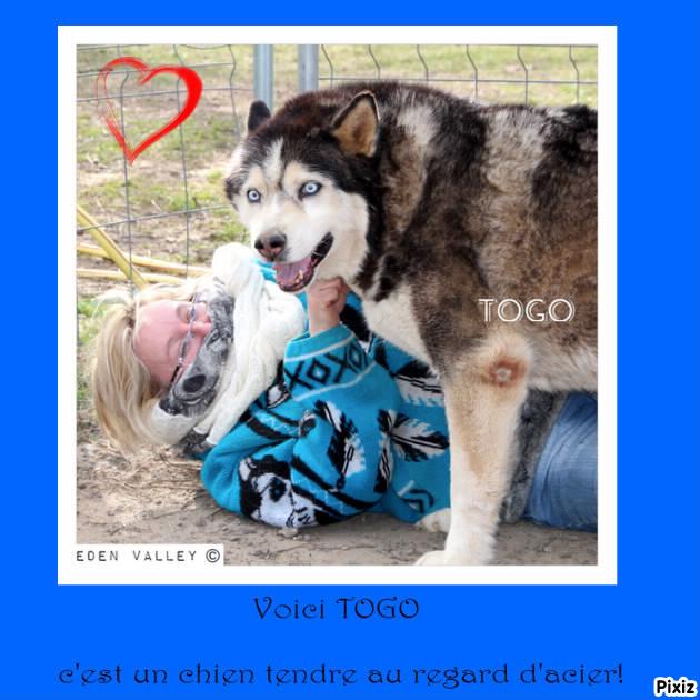 Togo, husky gris né le 25 Octobre 2002 ASSO39 - Page 3 Pixiz-10