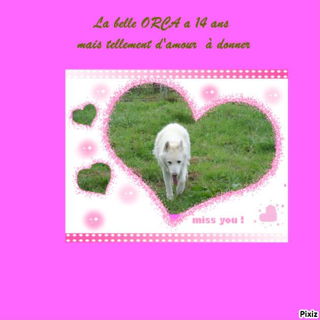 Orca, Husky, âgée de 14 ans née 20 Décembre 2000,  Eden Valley  ASSO39 - Page 5 Pixiz-12