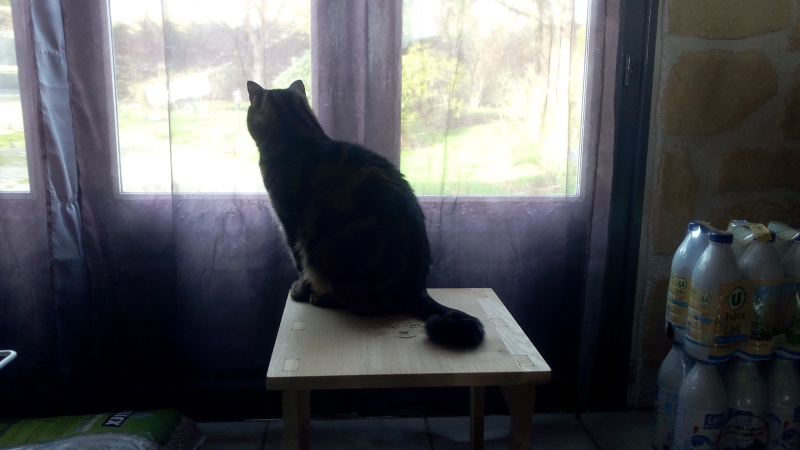 Tabouret pour chat Img_2017