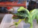 """Small"" Therizinosaurus 03910"
