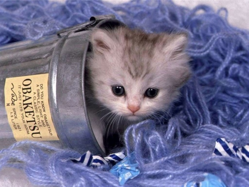 les chats Chats_10