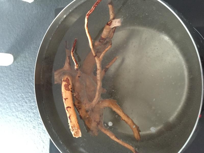 Mon 1er bac destiné aux crevettes: Problème d'algue ... - Page 2 Image10
