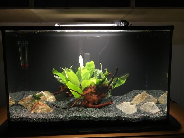 Mon 1er bac destiné aux crevettes: Problème d'algue ... - Page 2 Image111