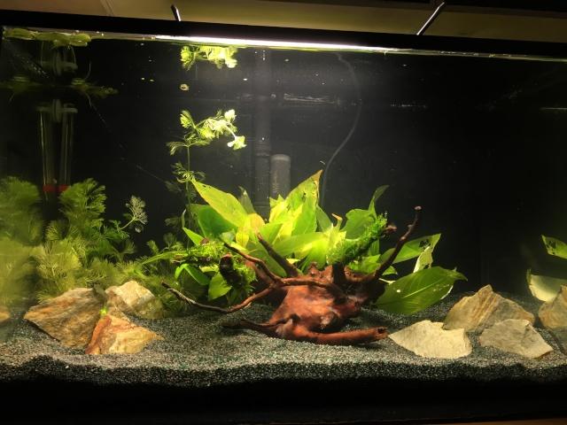 Mon 1er bac destiné aux crevettes: Problème d'algue ... - Page 2 Img_0920