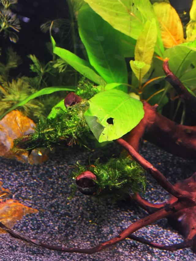 Mon 1er bac destiné aux crevettes: Problème d'algue ... - Page 2 Img_0923