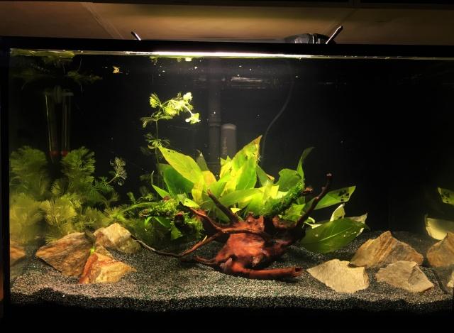 Mon 1er bac destiné aux crevettes: Problème d'algue ... - Page 2 Img_0925