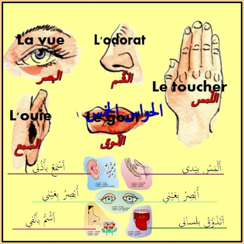 cours دروس  - Page 3 Ouyy_e12