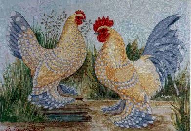 la poule Sabelpoot Sabel_10