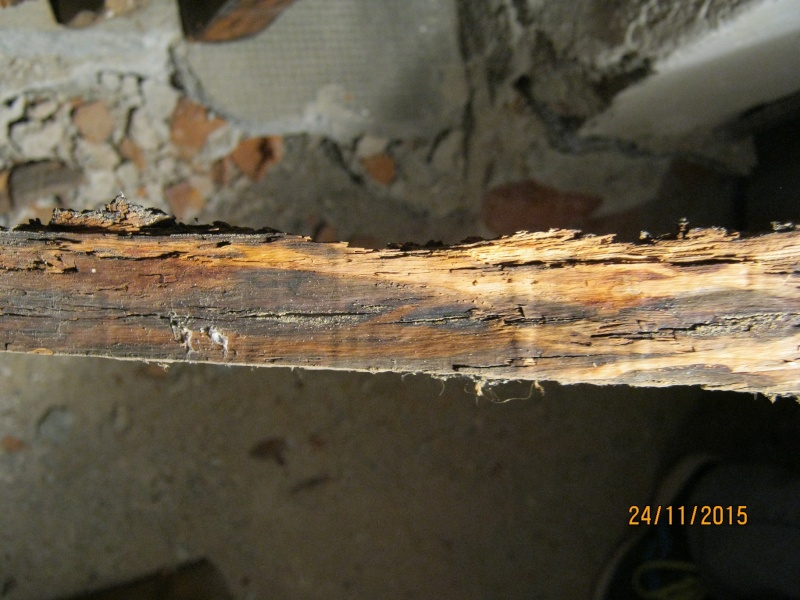 Aiuto riconoscimento legno Img_2716