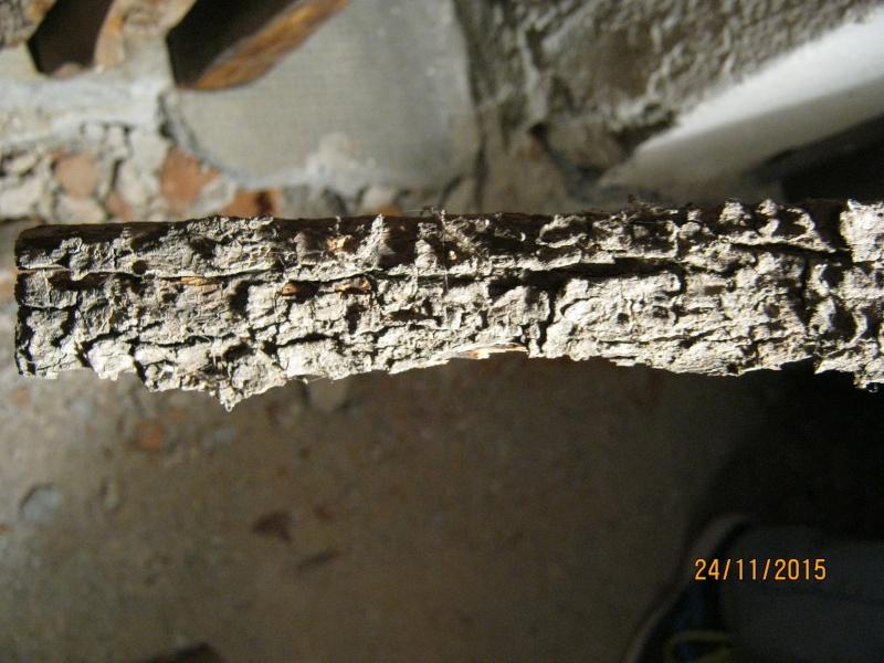 Aiuto riconoscimento legno Img_2717