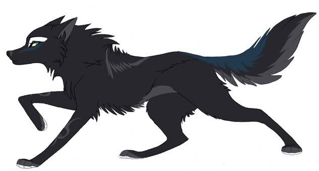 Black wolf rp Tigerl10