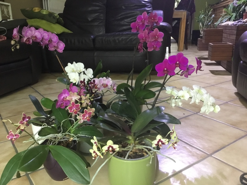 Floraison des orchidées de juin à........... Image23