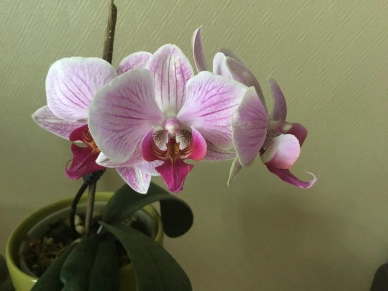 Floraison des orchidées de juin à........... Image24