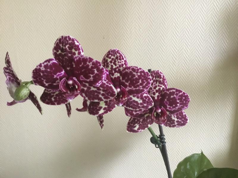 Floraison des orchidées de juin à........... Image31