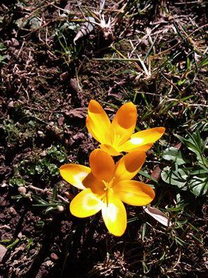 La nostra Primavera - Pagina 5 12744310