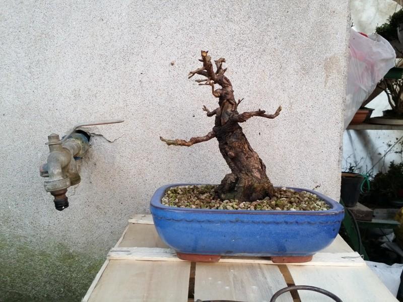 [WIP] Prunus mahaleb shoin Pru00614