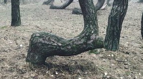 Una strana foresta Animal10