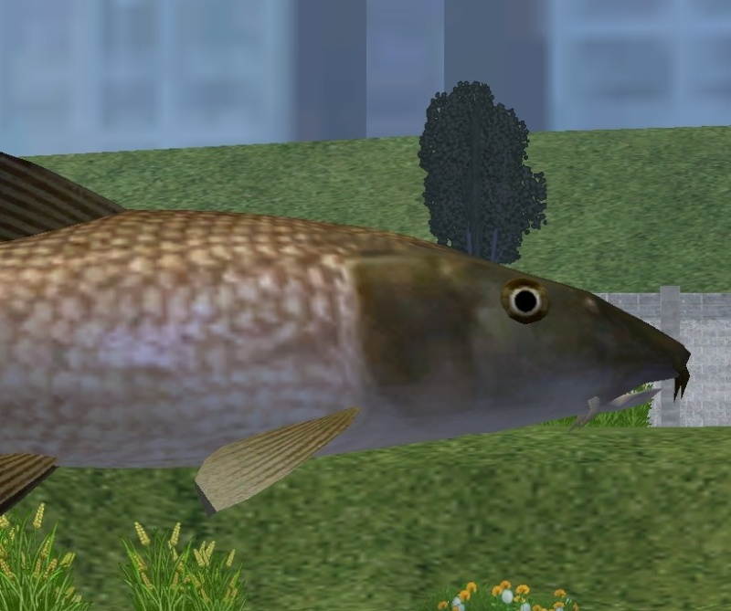 Topics tagged under marinemania on User - Made Creations Barbel10