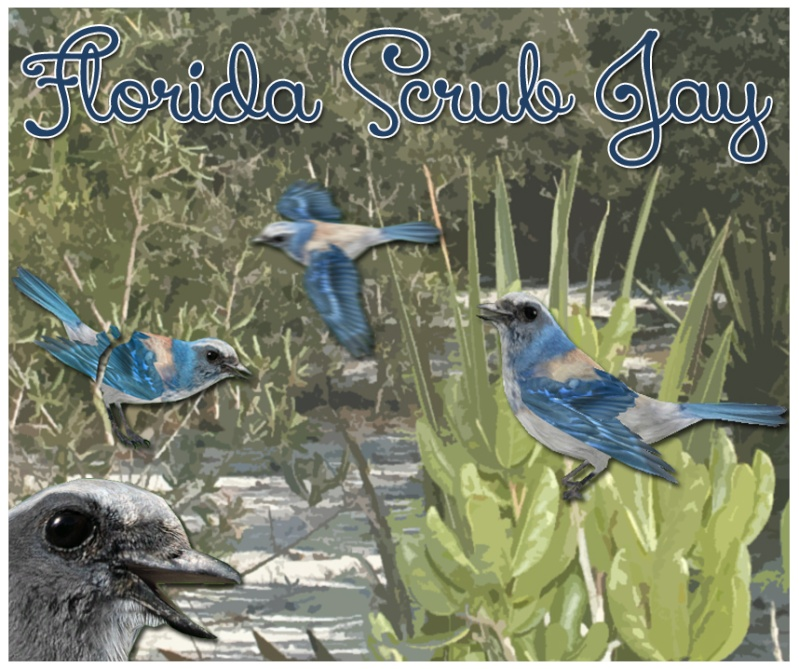 Topics tagged under florida on User - Made Creations Florid10