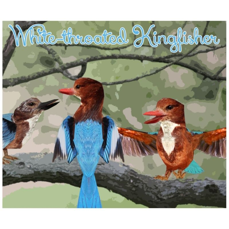 Topics tagged under kingfisher on User - Made Creations White-10